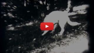 Video di Caccia d'Epoca - Addestramento Cani da Caccia
